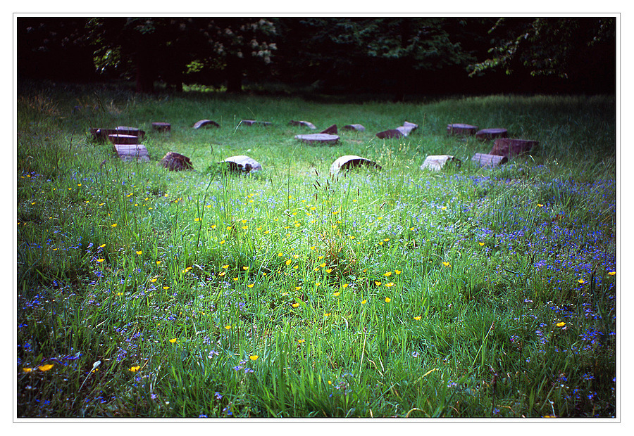 Fairy Ring | ZEISS VARIO-SONNAR 30-60MM F3.5-6.7 (TVS) <br> Click image for more details, Click <b>X</b> on top right of image to close