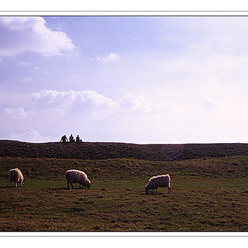 3 men and 3 sheep | ZEISS G PLANAR 45MM F2