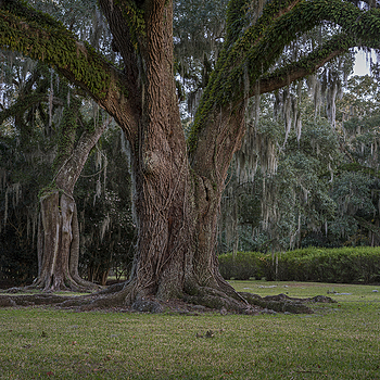 Avery Island | ZEISS SONNAR 55MM F1.8 FE ZA <br> Click image for more details, Click <b>X</b> on top right of image to close