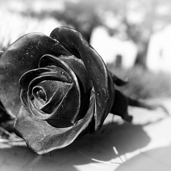 Bronze Rose on Grave | ZEISS DISTAGON F2 28MM <br> Click image for more details, Click <b>X</b> on top right of image to close