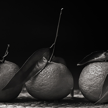 Still life, 3 Corsican clementines | ZEISS CY MAKRO-PLANAR 60MM F2.8 <br> Click image for more details, Click <b>X</b> on top right of image to close