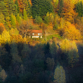 Autumn 2015 <5> | ZEISS APO SONNAR F2 135MM <br> Click image for more details, Click <b>X</b> on top right of image to close