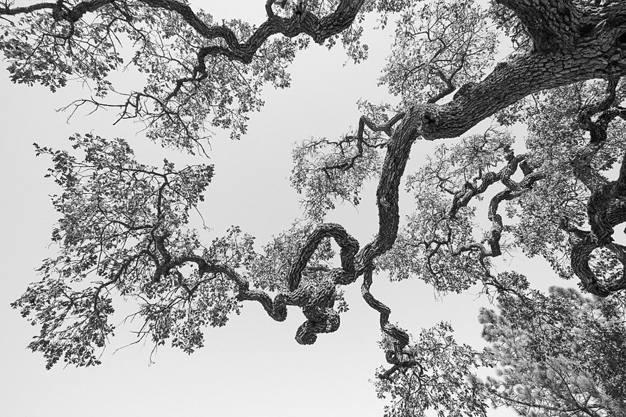 Looking up | ZEISS VARIO-TESSAR 16-70MM F4 ZOOM <br> Click image for more details, Click <b>X</b> on top right of image to close