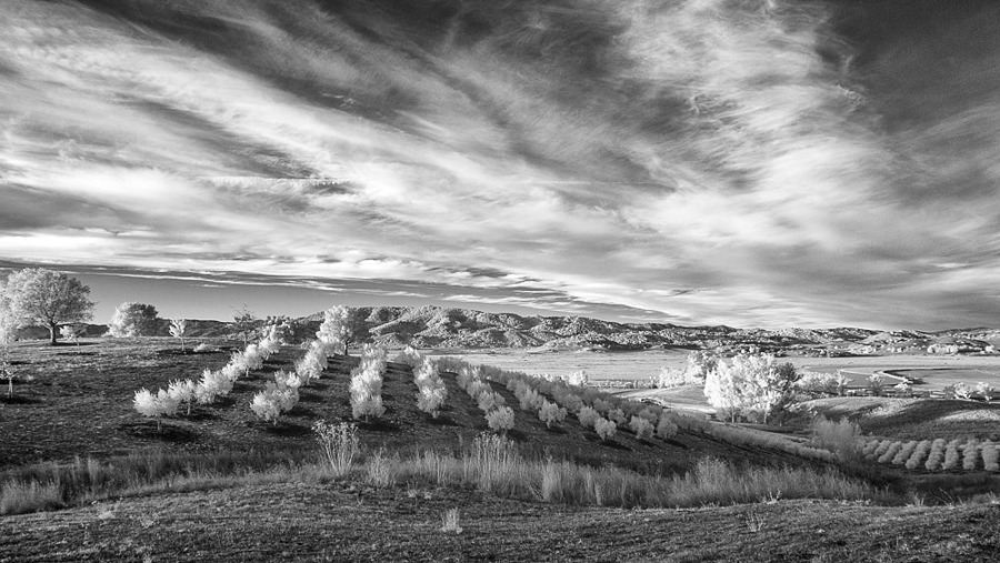 Sunrise over olive fields, Sonoma Valley | ZEISS VARIO-TESSAR T* FE 16-35MM F4 ZA OSS <br> Click image for more details, Click <b>X</b> on top right of image to close