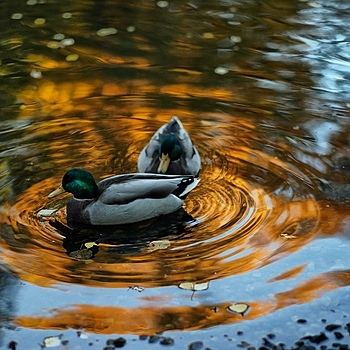 """On Golden Pond"" 
