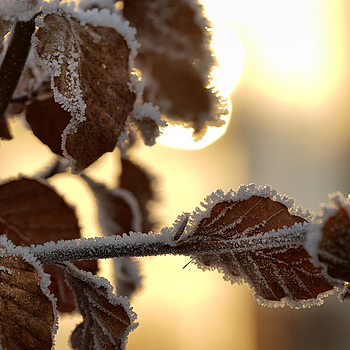 Frost - eventually | ZEISS APO SONNAR F2 135MM <br> Click image for more details, Click <b>X</b> on top right of image to close