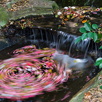 Petal Whirlpool | ZEISS ZA VARIO-SONNAR F2.8 24–70MM <br> Click image for more details, Click <b>X</b> on top right of image to close