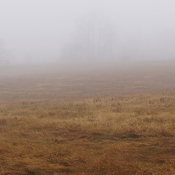Fog Panorama | LENS MODEL NOT SET