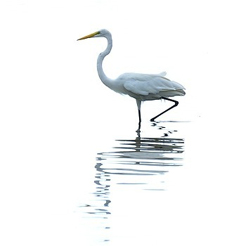 Zen Heron | LENS MODEL NOT SET <br> Click image for more details, Click <b>X</b> on top right of image to close