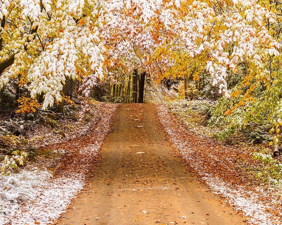 Fall into Winter | LENS MODEL NOT SET <br> Click image for more details, Click <b>X</b> on top right of image to close