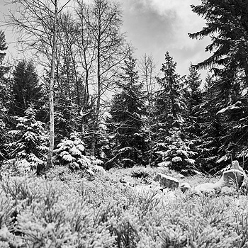 Winter Scene | ZEISS FE 35MM F2.8 ZA <br> Click image for more details, Click <b>X</b> on top right of image to close