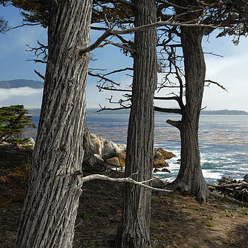 Monterey Sentinels | LENS MODEL NOT SET <br> Click image for more details, Click <b>X</b> on top right of image to close