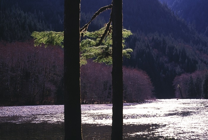 Middle Fork Snoqualmie, Washington. | LENS MODEL NOT SET <br> Click image for more details, Click <b>X</b> on top right of image to close