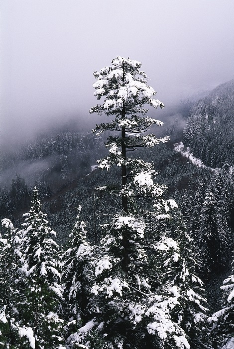 Off Raven's Roost. Washington Cascades. | LENS MODEL NOT SET <br> Click image for more details, Click <b>X</b> on top right of image to close