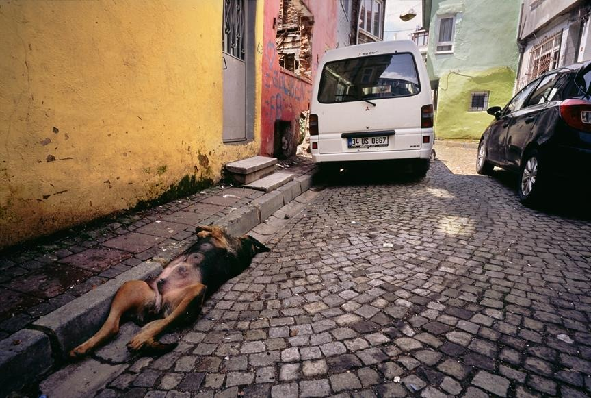 Dog Sleeping in an Alley. Istanbul, Turkey. | ZEISS G BIOGON 21MM F2.8 <br> Click image for more details, Click <b>X</b> on top right of image to close
