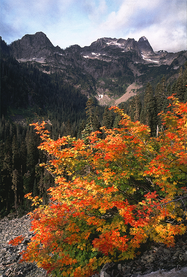 Bryant Peak and Vine Maple, Washington Cascades. | LENS MODEL NOT SET <br> Click image for more details, Click <b>X</b> on top right of image to close