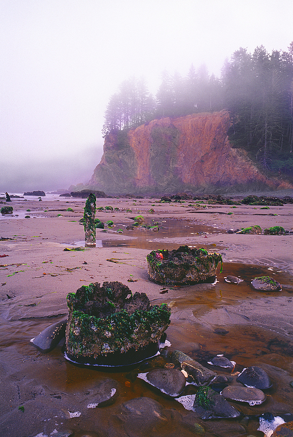 Scott's Bluff at Low Tide. Olympic National Park, Washington. | LENS MODEL NOT SET <br> Click image for more details, Click <b>X</b> on top right of image to close