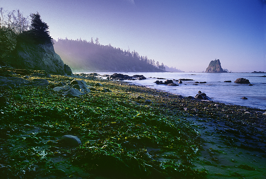 Strawberry Point. Olympic Nat. Park, Washington. | LENS MODEL NOT SET <br> Click image for more details, Click <b>X</b> on top right of image to close