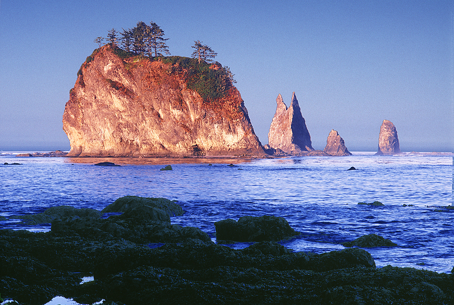 Seastacks. Scott's Cove. Olympic Nat. Park, Washington. | LENS MODEL NOT SET <br> Click image for more details, Click <b>X</b> on top right of image to close