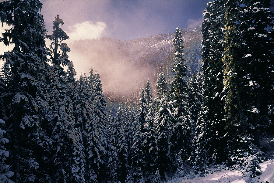 Forest off Snoqualmie Pass. Washington Cascades. | LENS MODEL NOT SET <br> Click image for more details, Click <b>X</b> on top right of image to close