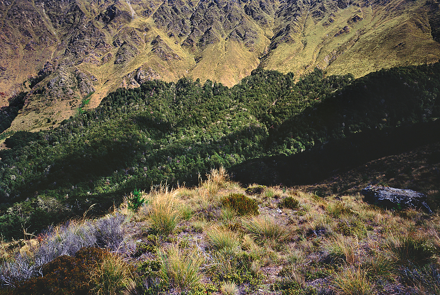 Off Ben Lomond Track. South Island, New Zealand. | ZEISS G SONNAR 90MM F2.8 <br> Click image for more details, Click <b>X</b> on top right of image to close
