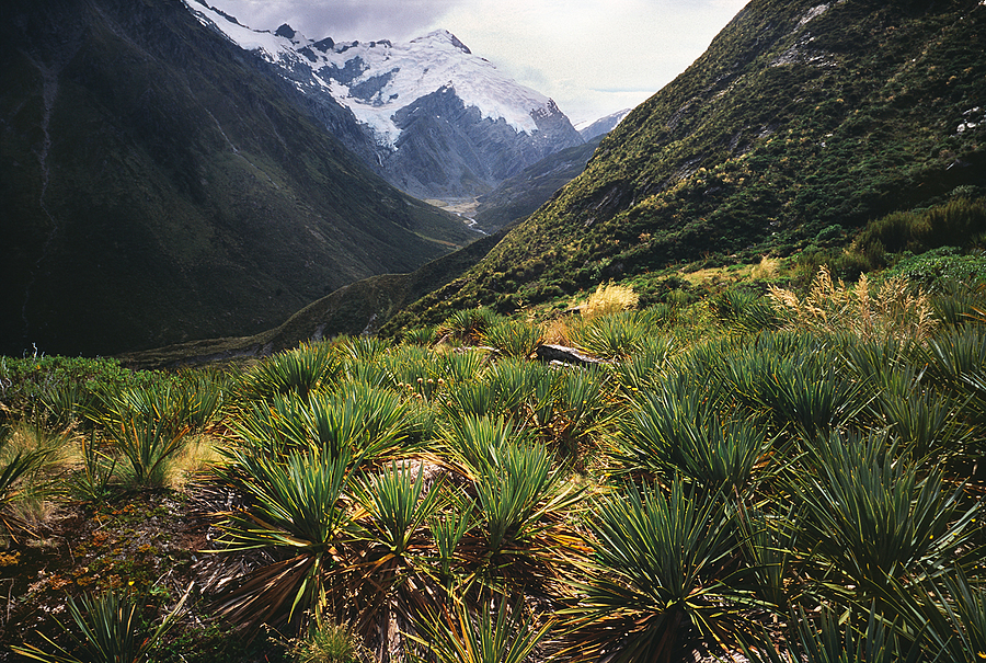 Rees Track. Mt. Aspiring Nat. Park, New Zealand. | LENS MODEL NOT SET <br> Click image for more details, Click <b>X</b> on top right of image to close