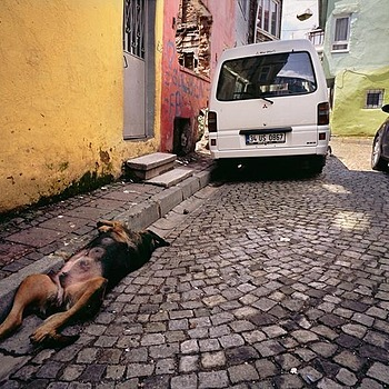 Dog Sleeping in an Alley. Istanbul, Turkey.