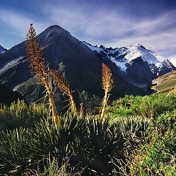 Rees Track. Mt. Aspiring Nat. Park, New Zealand. | ZEISS G BIOGON 21MM F2.8 <br> Click image for more details, Click <b>X</b> on top right of image to close