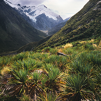 Rees Track. Mt. Aspiring Nat. Park, New Zealand. | LENS MODEL NOT SET