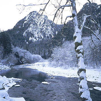 Middle Fork Snoqualmie, Washington. | ZEISS G BIOGON 21MM F2.8 <br> Click image for more details, Click <b>X</b> on top right of image to close