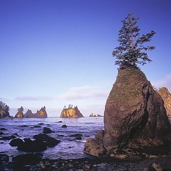 Cove South of Point of Arches, Washington State. | ZEISS G BIOGON 21MM F2.8 <br> Click image for more details, Click <b>X</b> on top right of image to close