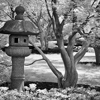 Infrared: Shiojiri Garden, Mishawaka, Indiana | ZEISS MAKRO PLANAR F2.0 50MM <br> Click image for more details, Click <b>X</b> on top right of image to close