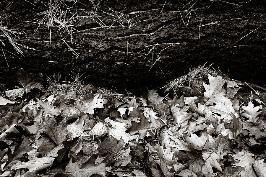 fallen tree, needles, and leaves | ZEISS DISTAGON F2.8 21MM <br> Click image for more details, Click <b>X</b> on top right of image to close