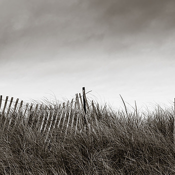 dune fence | ZEISS MILVUS 50MM F1.4 <br> Click image for more details, Click <b>X</b> on top right of image to close