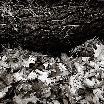 fallen tree, needles, and leaves | ZEISS DISTAGON F2.8 21MM