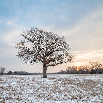 Winter Oak | ZEISS DISTAGON F2.8 15MM <br> Click image for more details, Click <b>X</b> on top right of image to close