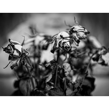 Life in Mono | ZEISS SONNAR 55MM F1.8 FE ZA <br> Click image for more details, Click <b>X</b> on top right of image to close