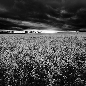 Moody B&W | ZEISS VARIO-TESSAR T* FE 16-35MM F4 ZA OSS <br> Click image for more details, Click <b>X</b> on top right of image to close