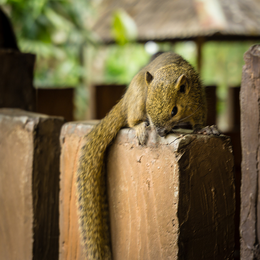 Cute Squirrel | LENS MODEL NOT SET <br> Click image for more details, Click <b>X</b> on top right of image to close