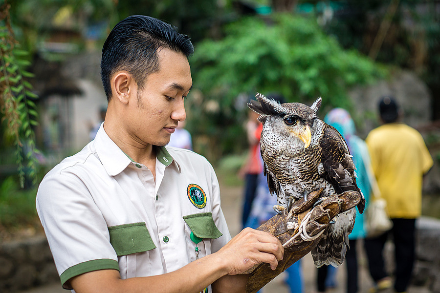 Owl man | LENS MODEL NOT SET <br> Click image for more details, Click <b>X</b> on top right of image to close