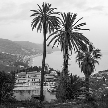 Sicilian Palms | ZEISS DISTAGON F2.8 21MM <br> Click image for more details, Click <b>X</b> on top right of image to close