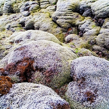 Mossy Lava Fields | ZEISS DISTAGON F2.8 21MM <br> Click image for more details, Click <b>X</b> on top right of image to close