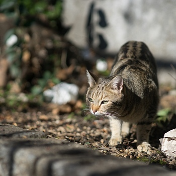 Urban Wild Cat | LENS MODEL NOT SET <br> Click image for more details, Click <b>X</b> on top right of image to close