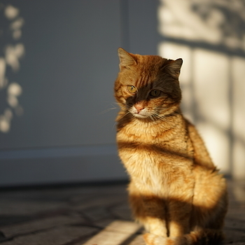 Lonely Cat | ZEISS SONNAR 55MM F1.8 FE ZA <br> Click image for more details, Click <b>X</b> on top right of image to close