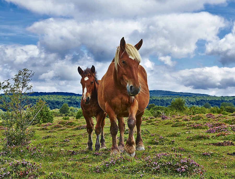 Mare and her foal | LENS MODEL NOT SET <br> Click image for more details, Click <b>X</b> on top right of image to close