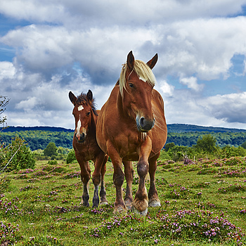 Mare and her foal | LENS MODEL NOT SET