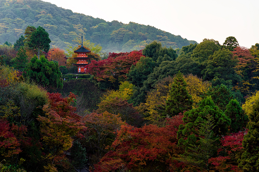 The Red Temple of Kyoto | ZEISS 85MM F1.8 SONNAR <br> Click image for more details, Click <b>X</b> on top right of image to close