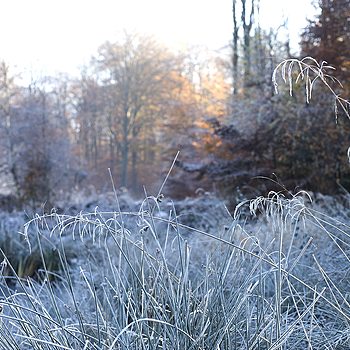 Frosty Morning 2604 | LENS MODEL NOT SET <br> Click image for more details, Click <b>X</b> on top right of image to close