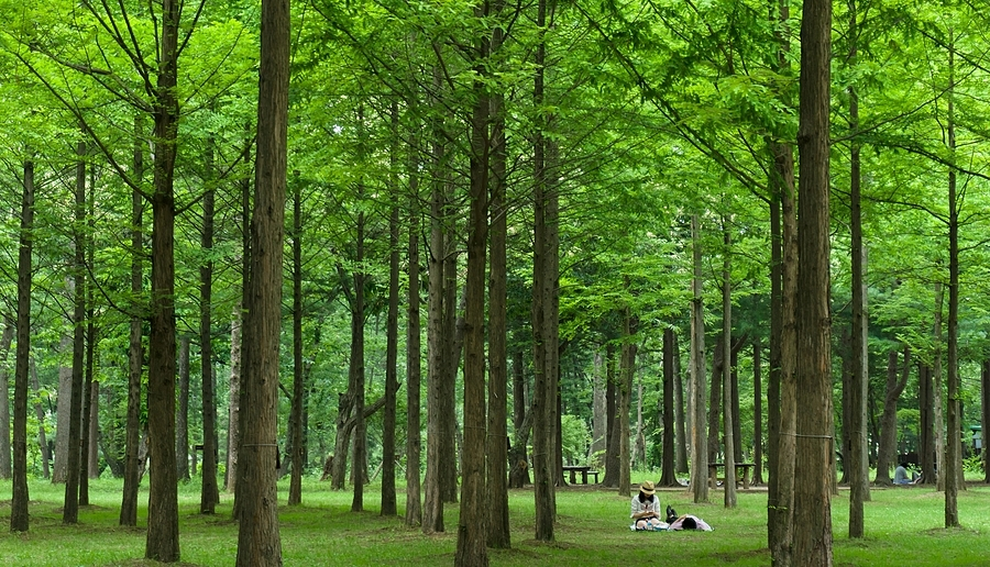 Nami Island candids | LENS MODEL NOT SET <br> Click image for more details, Click <b>X</b> on top right of image to close