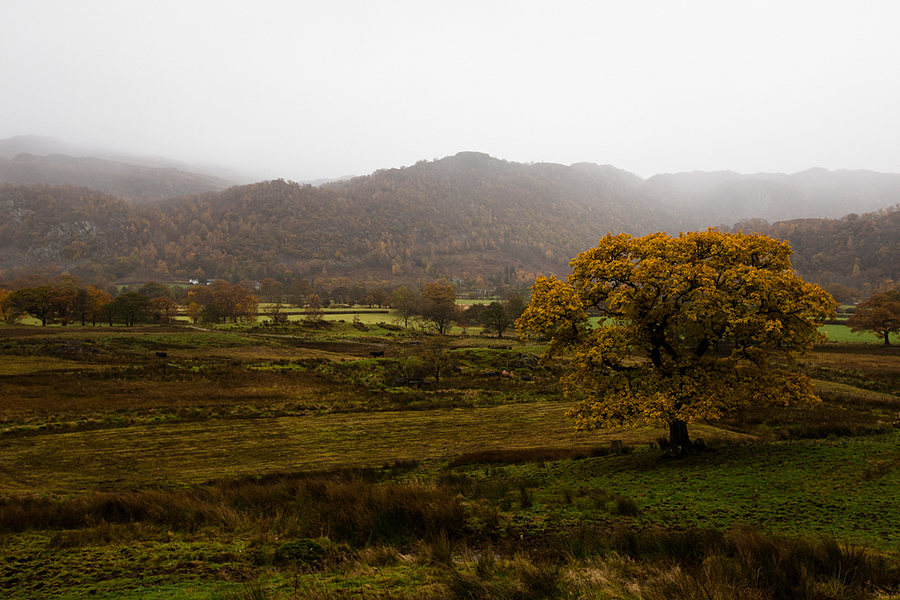 Lake District park in autumn | LENS MODEL NOT SET <br> Click image for more details, Click <b>X</b> on top right of image to close